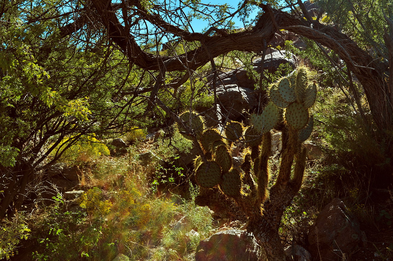 photo - cactus